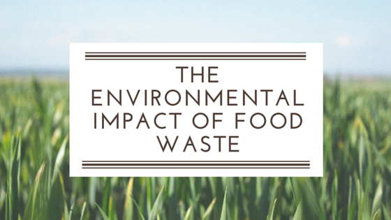 3_Surprising_Statistics_About_the_Environmental_Impact_of_Food_Waste.png