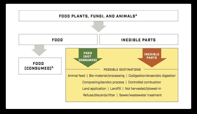 Understanding-Food-Loss-and-Waste-Standard.jpg