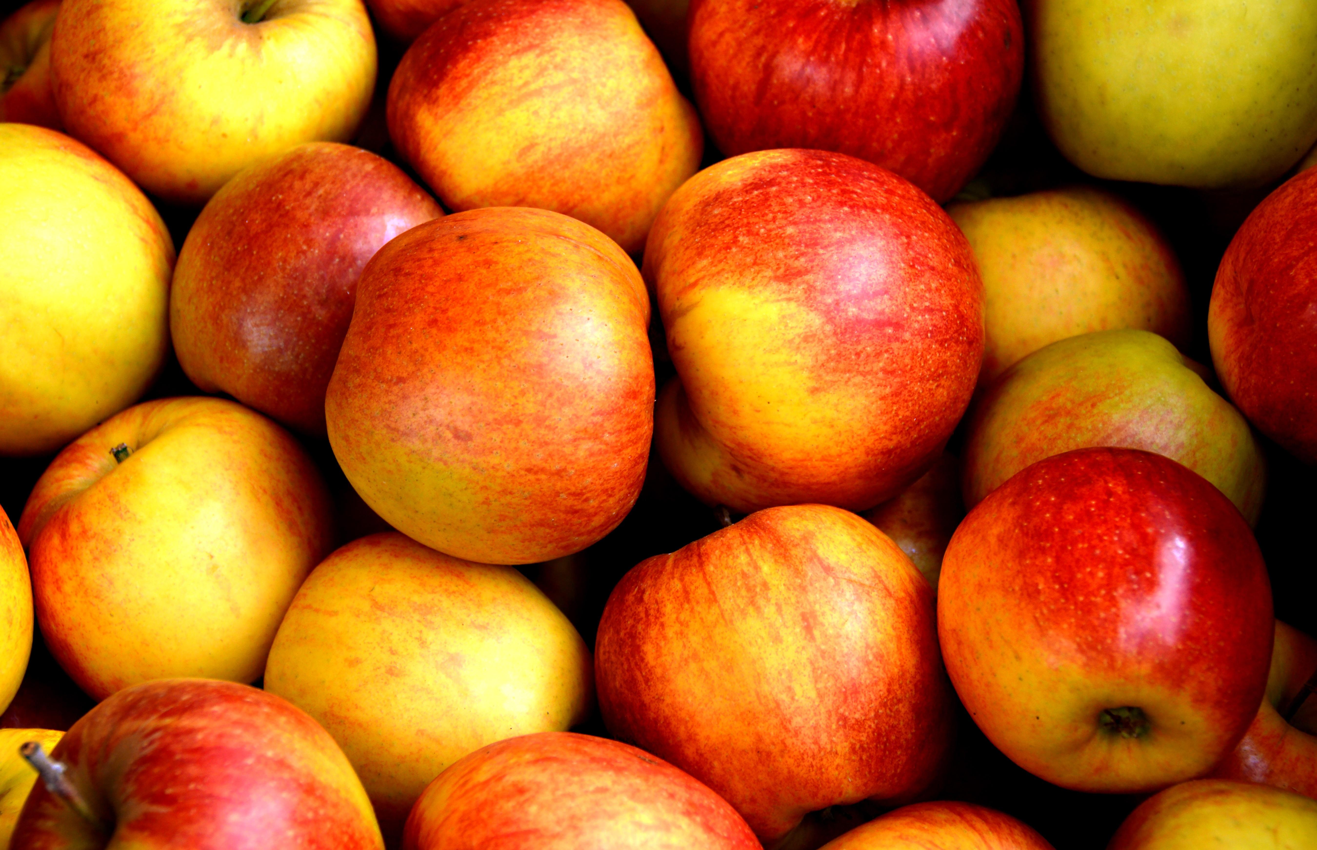 Surplus apples.jpeg