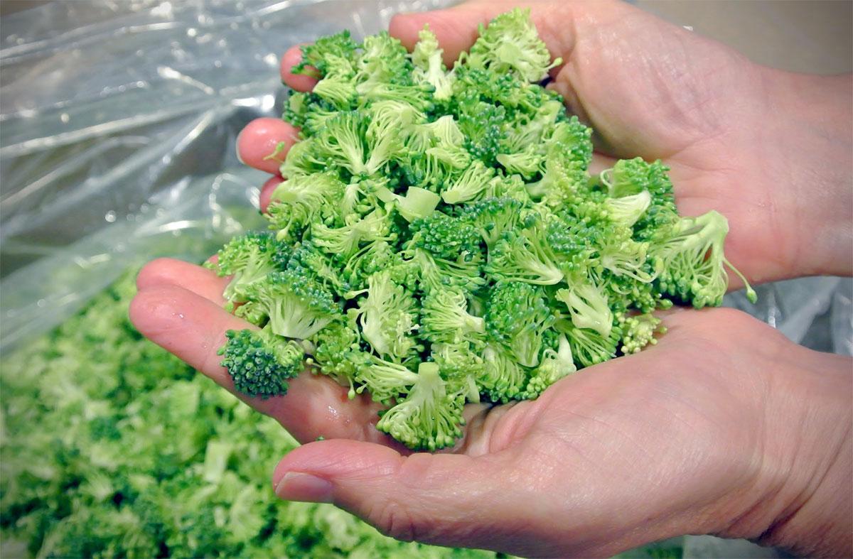 broccolifines_0968_1200px.jpg