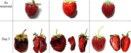 Strawberries2_web_1024
