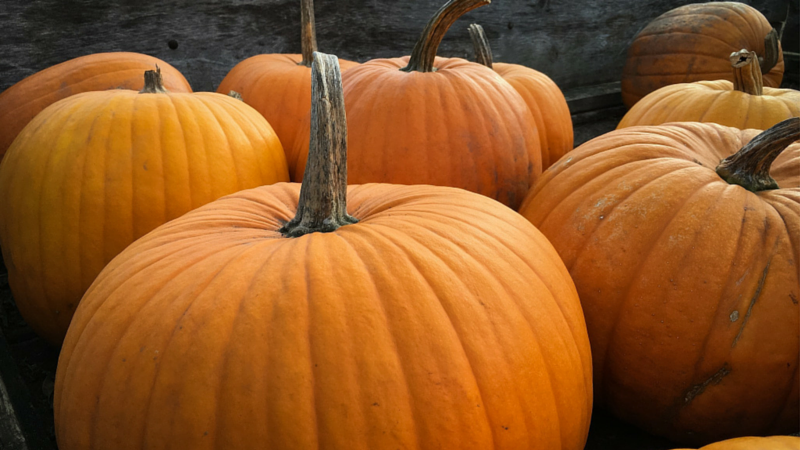 What_Happens_To_Pumpkins_After_Halloween
